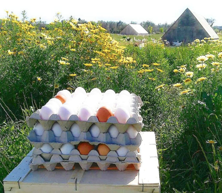 30 Uova da galline allevate al Pascolo - Pastured eggs - Galline allevate secondo natura - Le Uniche in Europa