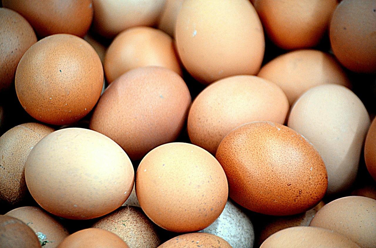 uova-galline-nel pollaio