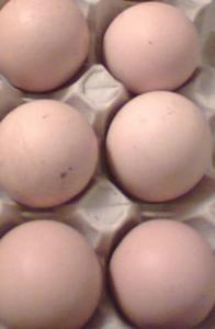 uova razza amrock