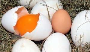 uova di oca biologiche