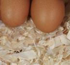 uova gallina barnevelder