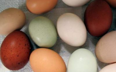 Uova fresche quanto durano
